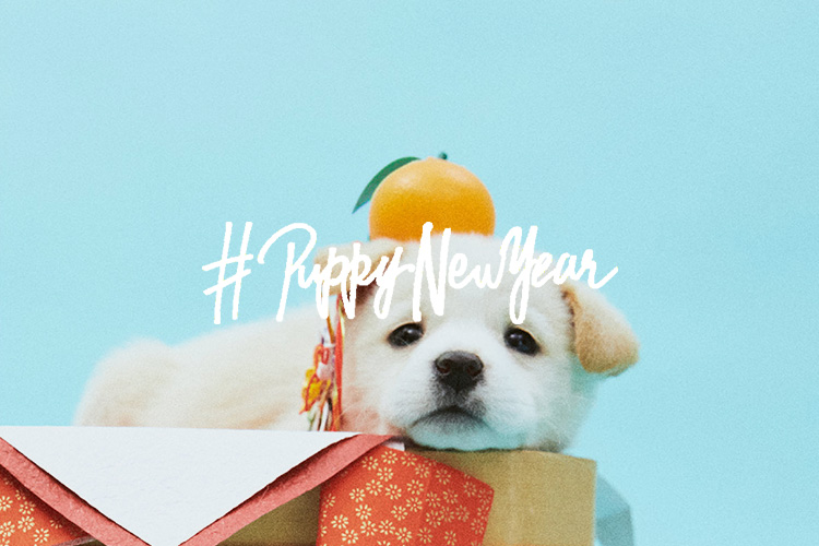 PUPPY NEW YEAR<br />